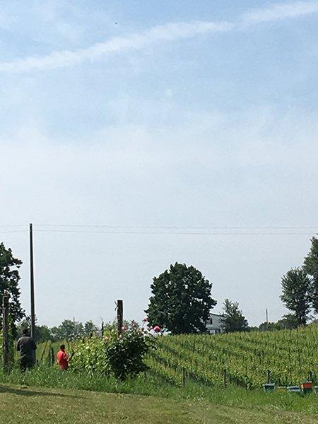 vista in lontananza di un campo  agricolo con erba alta, alberi e due persone che camminano