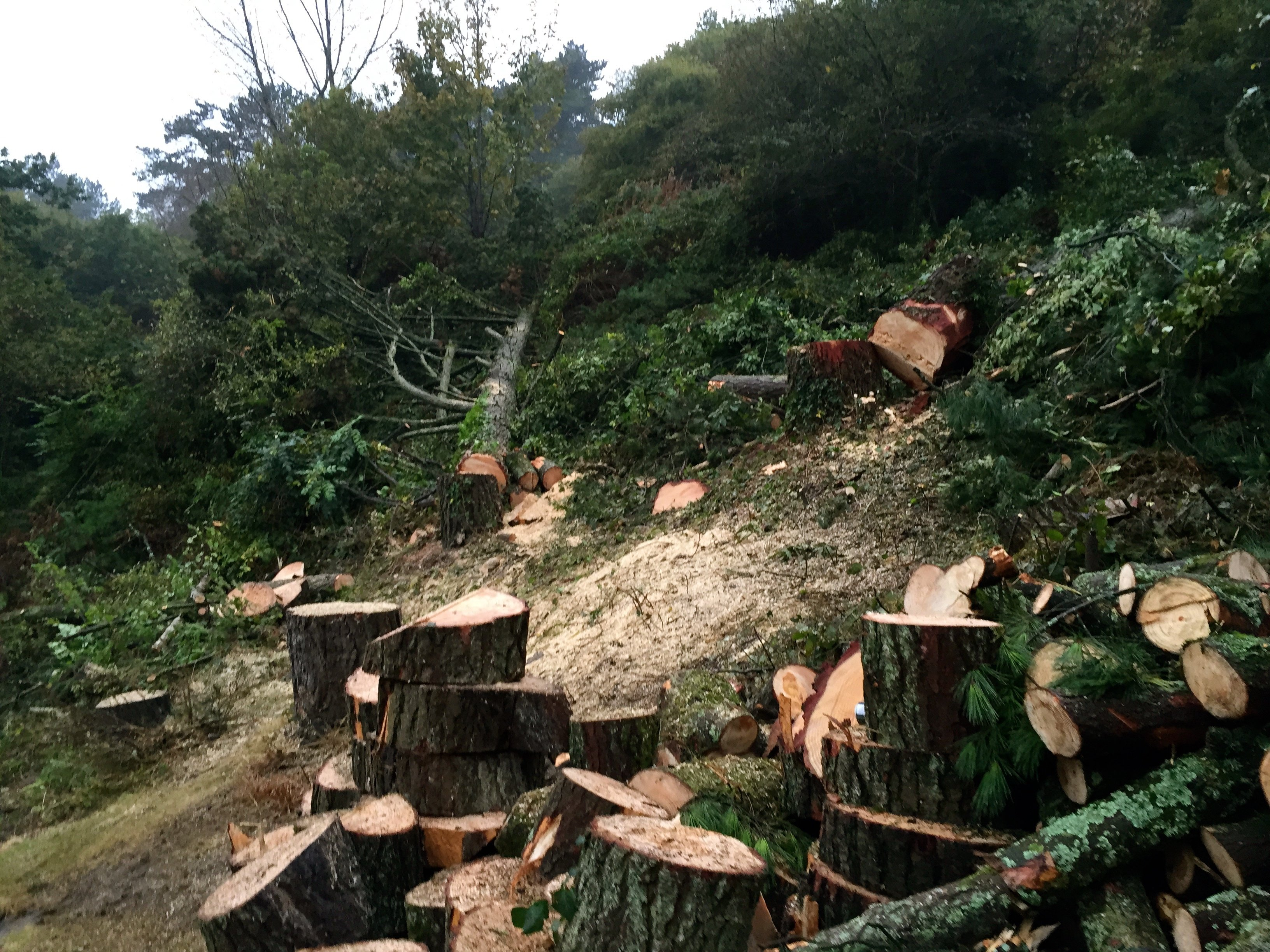 Tree work services