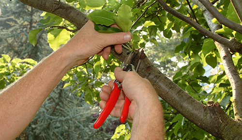 Tree care servicing in West Hartford, CT