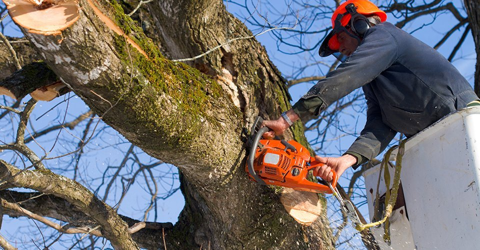 Excellent tree surgery in and around Driffield