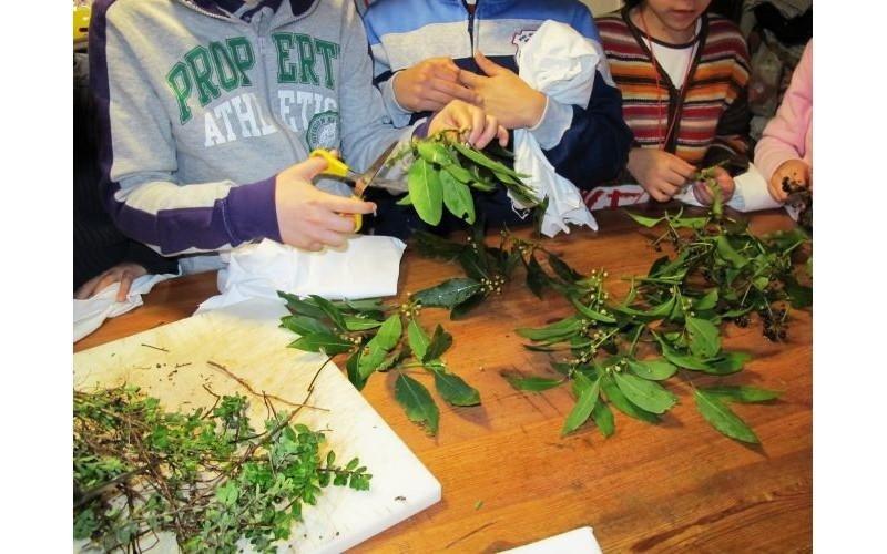 Attività con le piante
