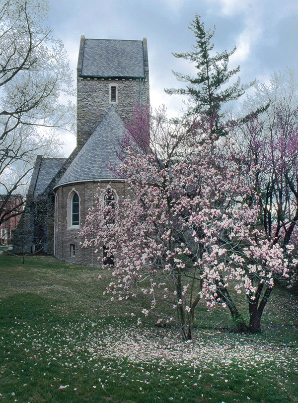 kumler chapel with magnolia in bloom