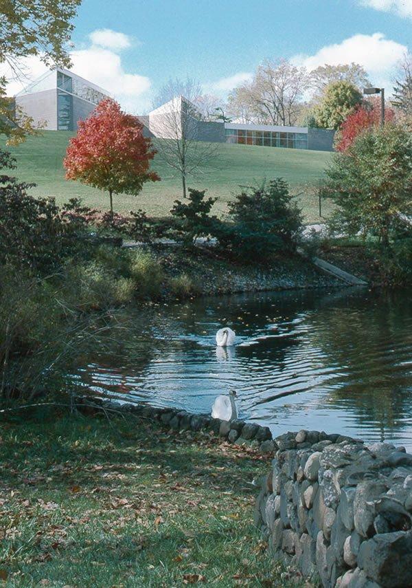 swans at miami museum