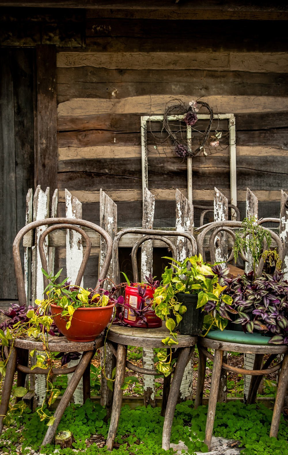 Chairs and potted vines