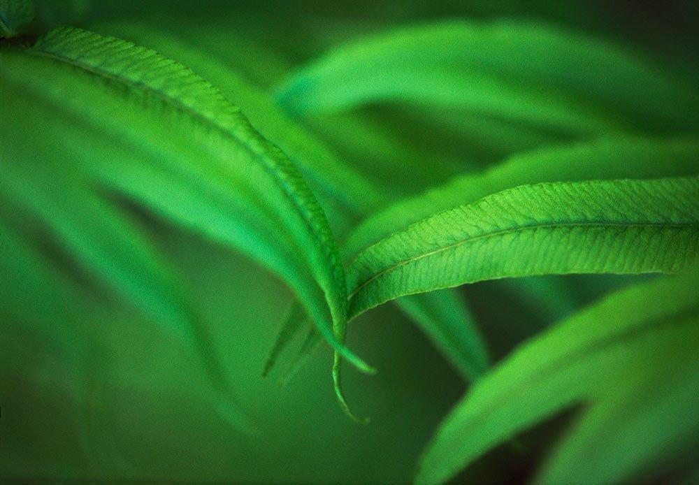 Touching fern