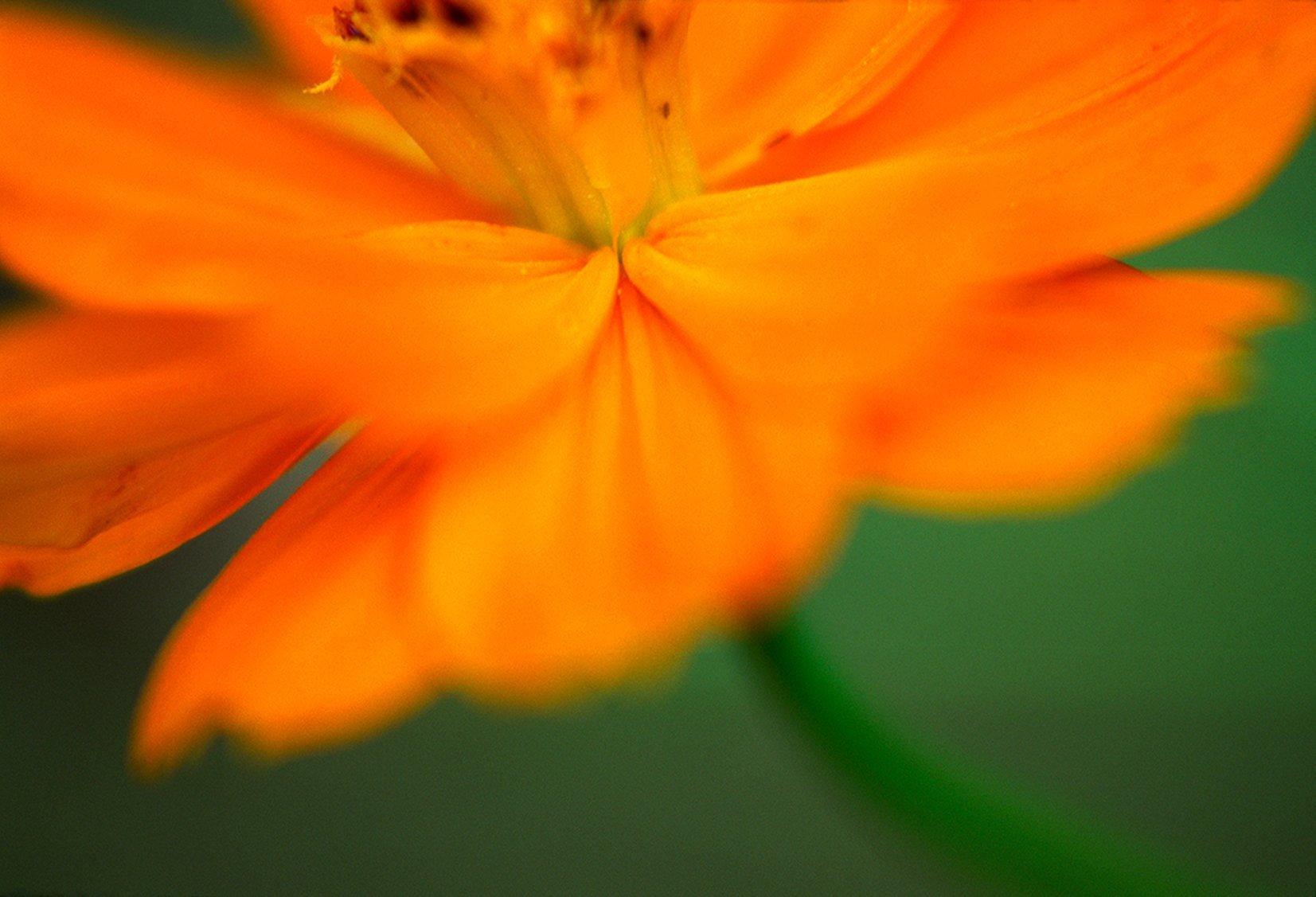 orange stem