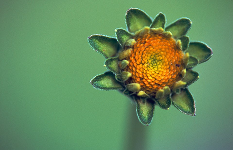 New orange flower closeup