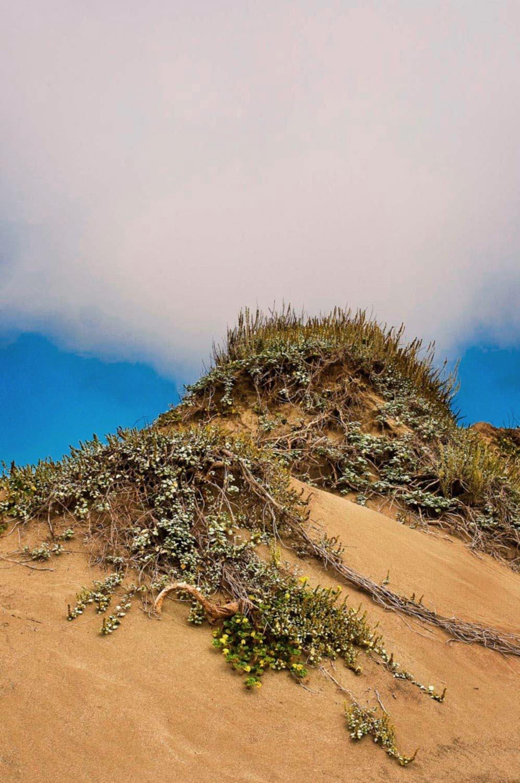 Fort Brag Beach, dunes
