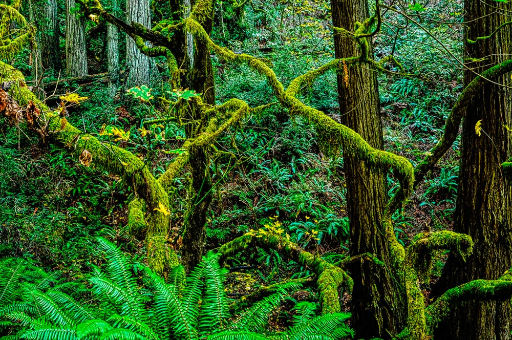 Lost Coast Forest