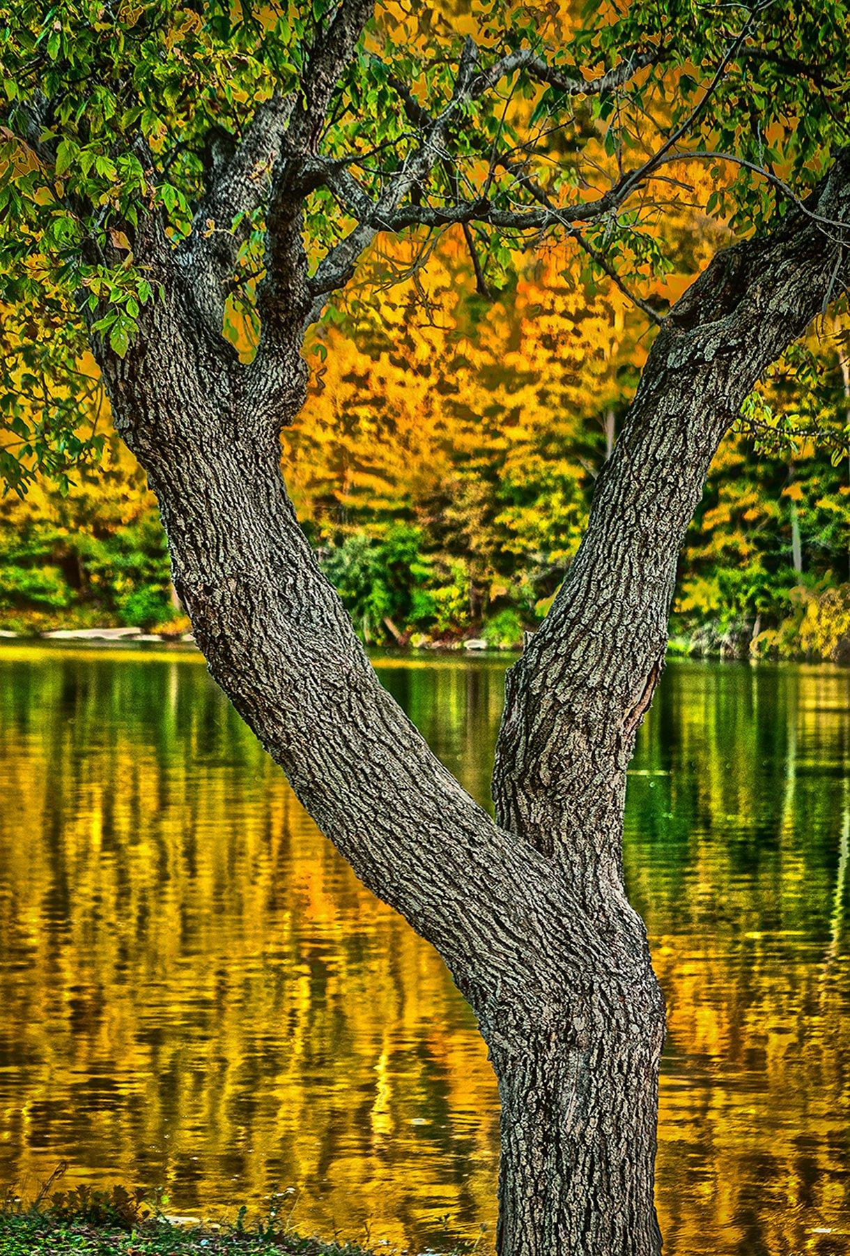 Ash & Lake Brookville, IN