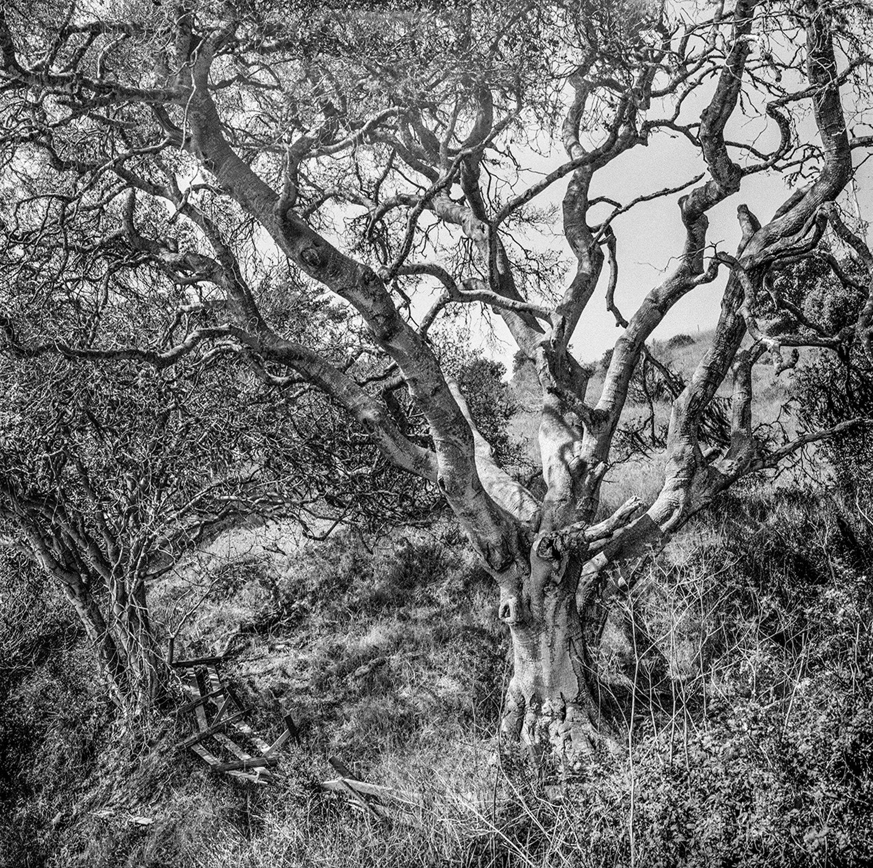 Oak & Fence Napa, CA