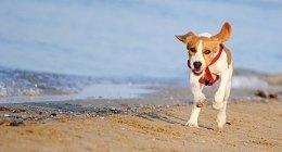 Cliniche veterinarie, broncoscopia veterinaria, cure per cuccioli in accrescimento