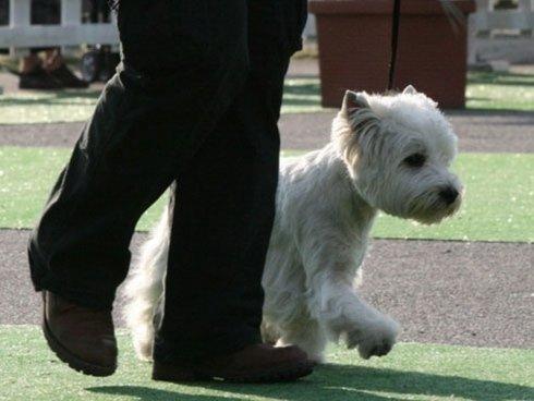 cane al passo