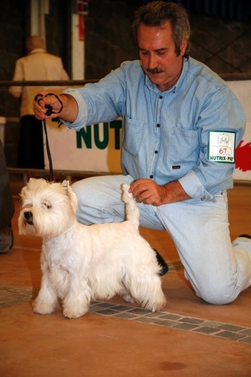 west highland white terrier gara