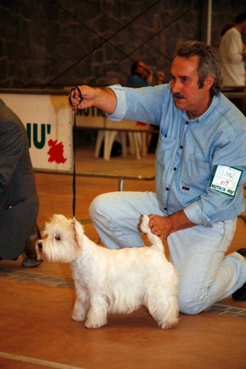 esposizione west highland white terrier