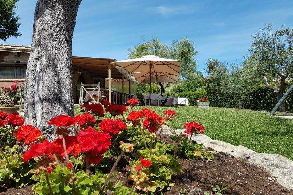 dei gerani rossi e vista di un giardino con degli ombrelloni