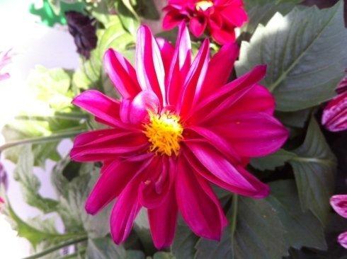 Piantine, orto, fiori, rieti