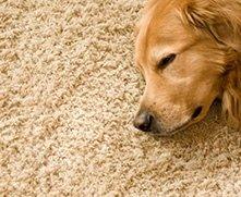 cane dorme su un tappeto