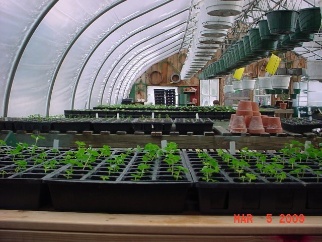 The Start - All of our annuals are grown right here from seed in our greenhouses
