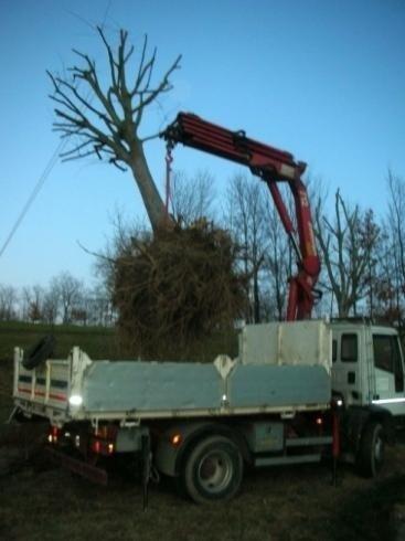 trasporto piante in zolla