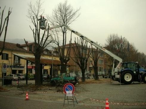potature alberi