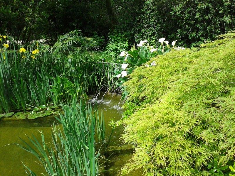 delle piante fiorite intorno a una pozza d' acqua