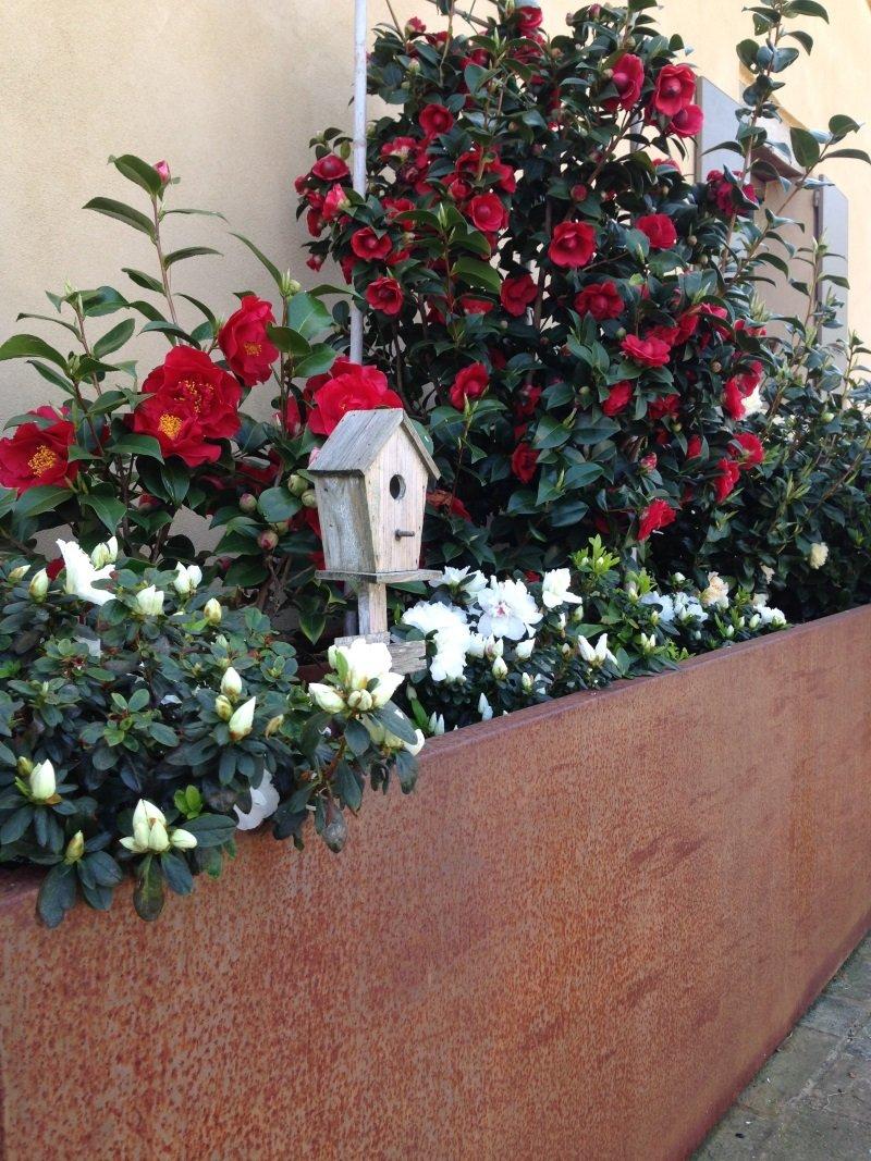 delle piante con dei fiori bordeaux e