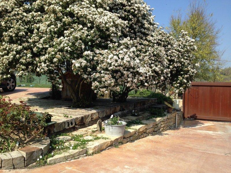 un albero pieno di fiori bianchi