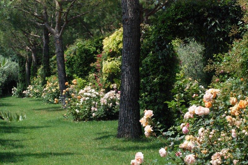 un prato con degli alberi e delle piante di rose bianche