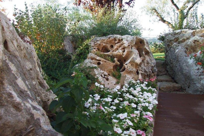 delle rocce e accanto dei fiori
