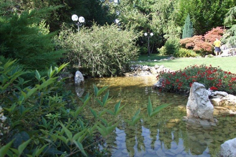 una pozza d'acqua e delle piante intorno