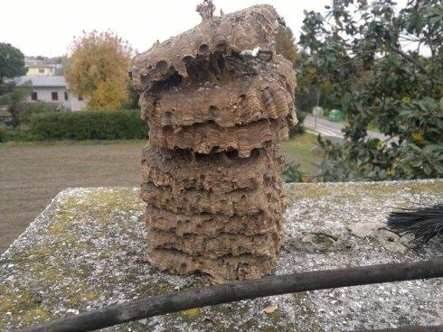 nidi di calabroni
