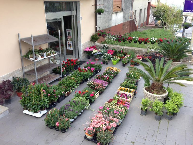 vista di piante da fiori