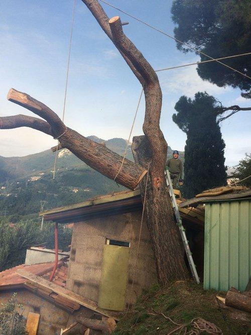 Potatura degli alberi a Seravezza