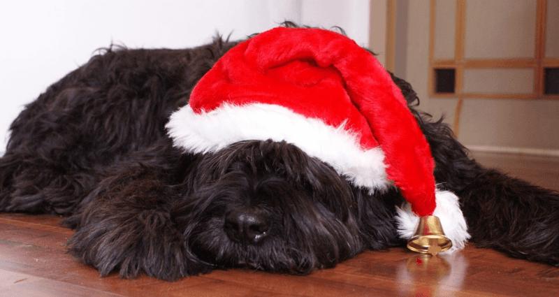 cane con cappello di babbo natale