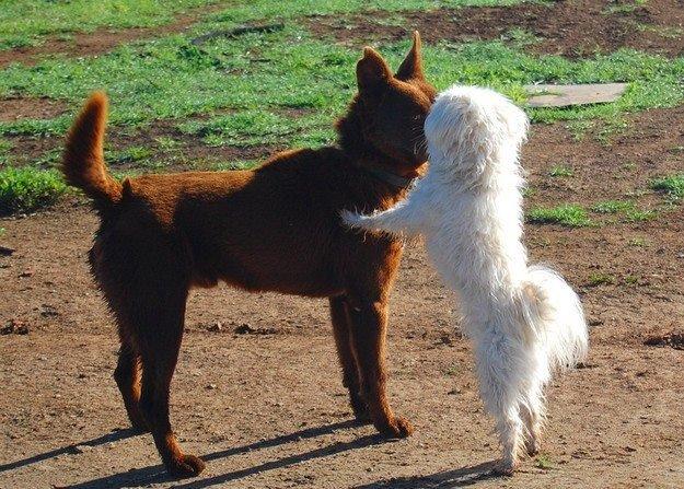 Cuccioli di cane giocando a Floridia Siracusa