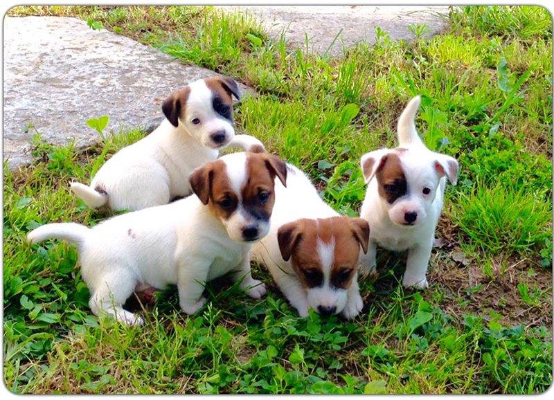 Cuccioli di cane giocando in un giardino a Floridia Siracusa