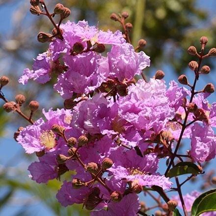 Alberi ornamentali da fiore per giardini