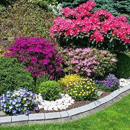 Arbusti ornamentali per giardini