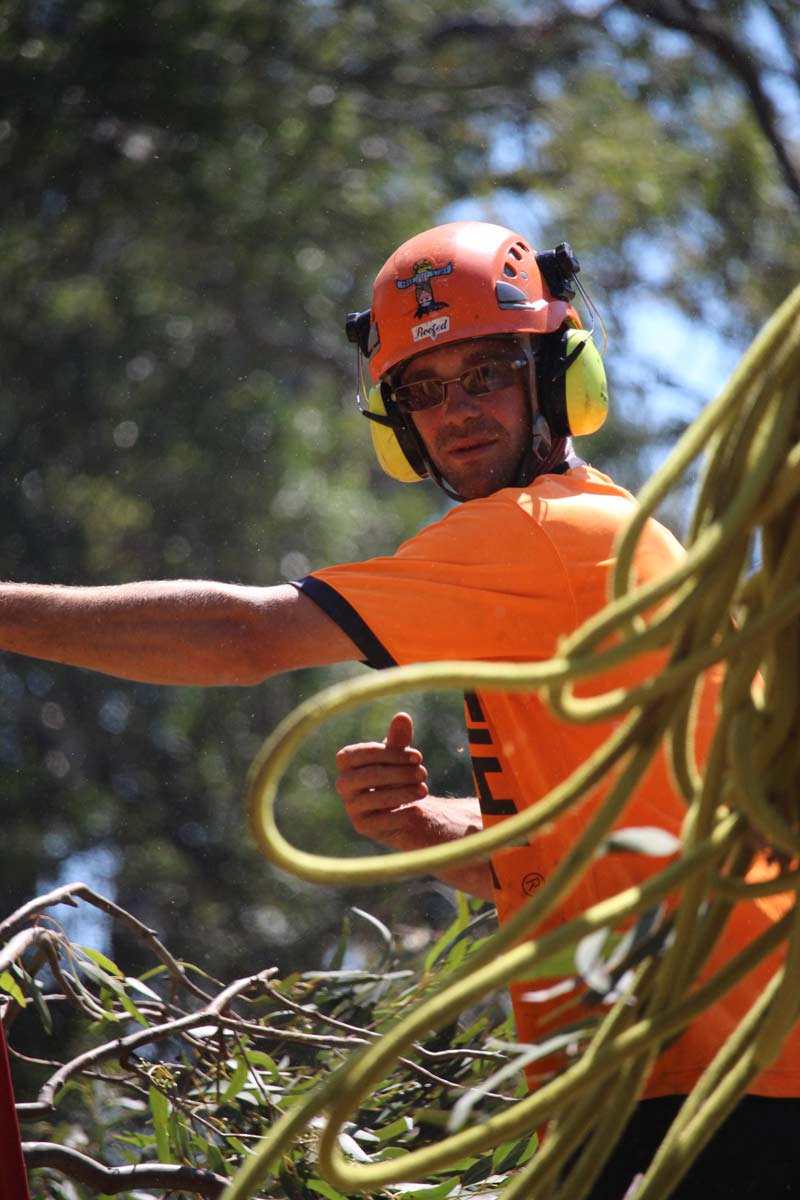 tree trimmer in an orange shirt with ropes