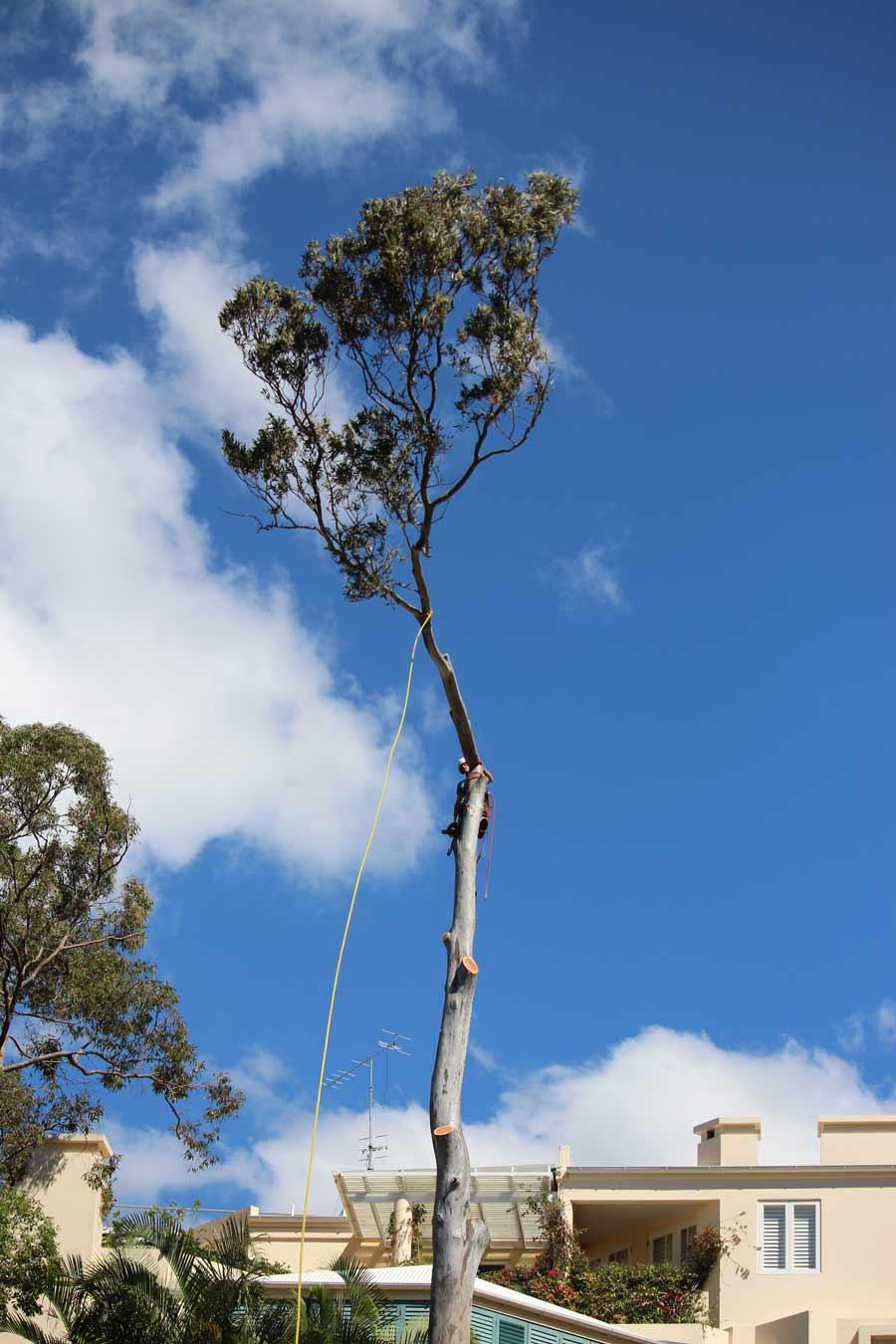 rope around a thin tree