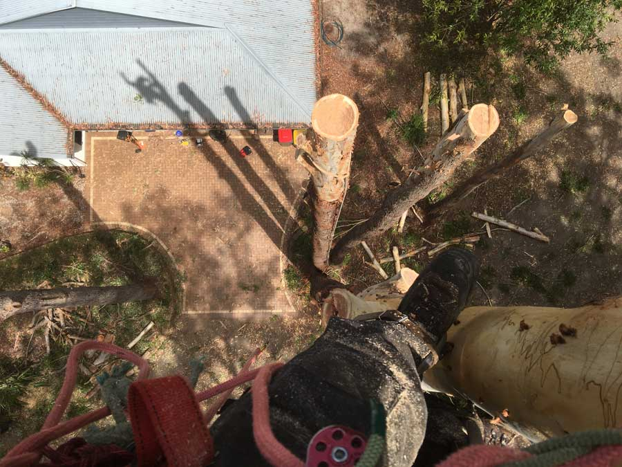 point of view tree trimmer
