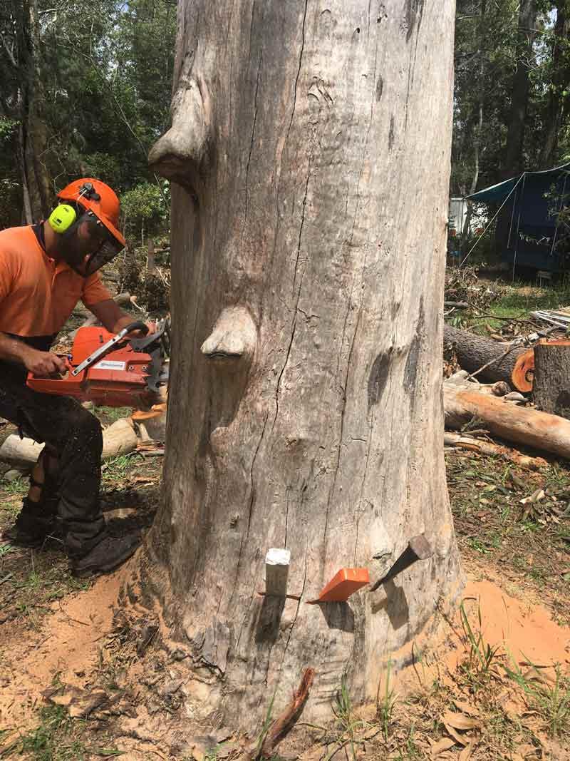 man sawing down tree