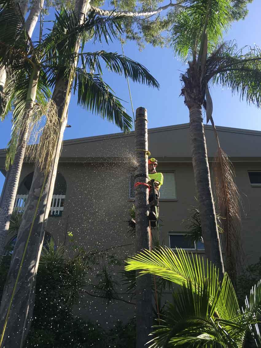 man in tree cutting it down