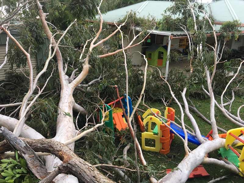 tree that has fallen down