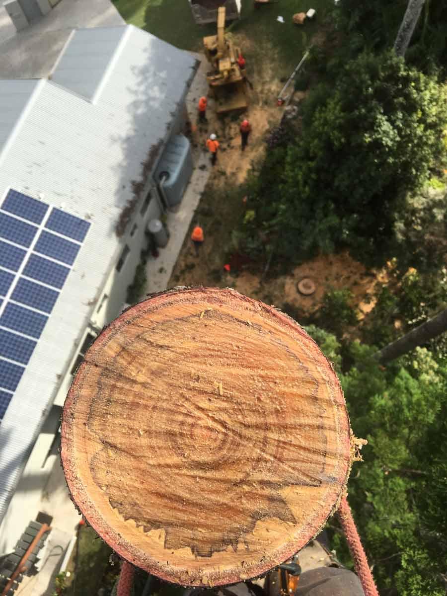 high up tree cut