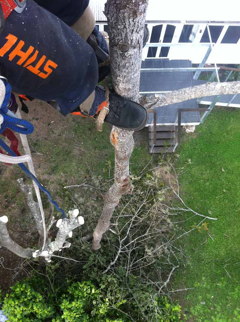 point of view of tree cutter looking down