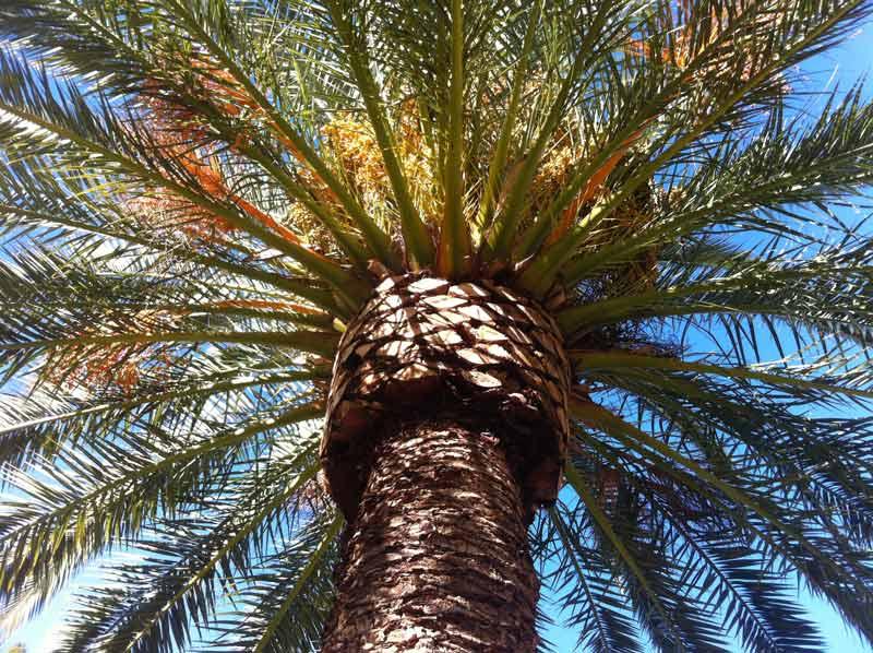 close up palm tree
