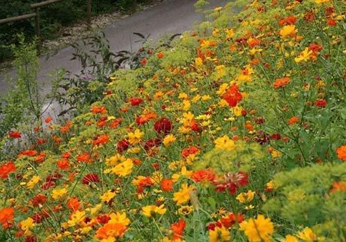dei fiori gialli,arancioni e rossi