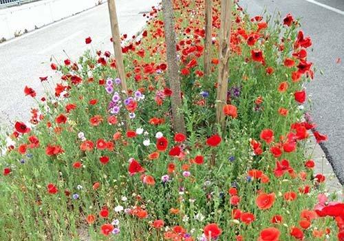 dei fiori rossi e viola e dell'erba